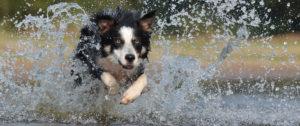 bg_dog-splashing