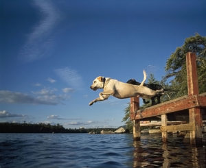 dog-jumping-off-dock